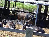 ◤阿淺的動物園:墾丁國家公園