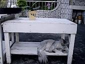 ◤阿淺的動物園:淺ㄚ咪 3