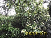 三角埔頂山 青龍嶺 大同山:DSCI0022.jpg