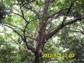 長壽山 成福山 十八羅漢奇岩:DSCI0057.jpg