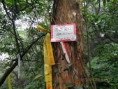 南勢坑古道 雞母嶺山:DSCN0906.JPG