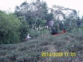 四面頭山 鵝角格山:DSCI0033.jpg
