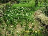 陽峰古道暨竹子湖聚餐:DSCI0039.jpg