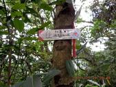 加投山 三百步嶺 八斗山:DSCN1361.JPG
