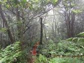 南勢坑古道 雞母嶺山:DSCN0912.JPG