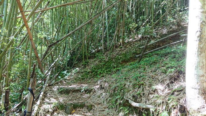 1060701象山移訓之北橫之旅:0702幽靈瀑布步道DSC_0258_調整大小 .JPG