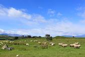 2016 紐西蘭南島之旅:TOP_4988.jpg