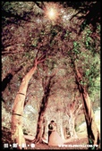 【高雄自助婚紗】TS-PHOTO婚紗攝影工作室:【推薦】高雄自助婚紗-婚紗攝影工作室_14.jpg
