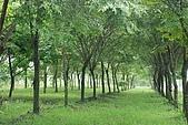 屏東好風光:平地造林.jpg