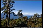 從武嶺至合歡山到關原的沿途雲山景觀可真是美絕了。:武嶺合歡山關原010.jpg