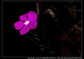 金門飛禽走獸花卉精華篇,其它散見於拍攝地點的相簿內。:金門飛禽走獸花卉精華篇36.jpg