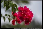 金門飛禽走獸花卉精華篇,其它散見於拍攝地點的相簿內。:金門飛禽走獸花卉精華篇27.jpg