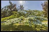 『石門水庫管理局』每逢四月一排平凡無奇的樹林,瞬間開闊的樹傘上積滿了白雪,是北台灣最美的流蘇花景點:石門水庫管理局09.jpg