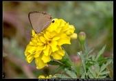 金門飛禽走獸花卉精華篇,其它散見於拍攝地點的相簿內。:金門飛禽走獸花卉精華篇32.jpg
