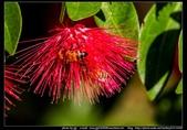 金門飛禽走獸花卉精華篇,其它散見於拍攝地點的相簿內。:金門飛禽走獸花卉精華篇42.jpg