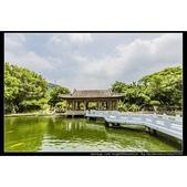 台北市士林區故宮博物院旁的『至善園』遊客稀少時常見藍鵲來戲水:相簿封面