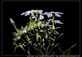 金門飛禽走獸花卉精華篇,其它散見於拍攝地點的相簿內。:金門飛禽走獸花卉精華篇21.jpg