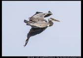 金門飛禽走獸花卉精華篇,其它散見於拍攝地點的相簿內。:金門飛禽走獸花卉精華篇09.jpg