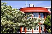 『石門水庫管理局』每逢四月一排平凡無奇的樹林,瞬間開闊的樹傘上積滿了白雪,是北台灣最美的流蘇花景點:石門水庫管理局16.jpg
