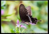 金門飛禽走獸花卉精華篇,其它散見於拍攝地點的相簿內。:金門飛禽走獸花卉精華篇18.jpg