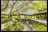 台北市士林區故宮博物院旁的『至善園』遊客稀少時常見藍鵲來戲水:故宮至善園17.jpg