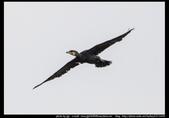金門飛禽走獸花卉精華篇,其它散見於拍攝地點的相簿內。:金門飛禽走獸花卉精華篇06.jpg