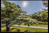 『石門水庫管理局』每逢四月一排平凡無奇的樹林,瞬間開闊的樹傘上積滿了白雪,是北台灣最美的流蘇花景點:石門水庫管理局04.jpg