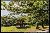 『石門水庫管理局』每逢四月一排平凡無奇的樹林,瞬間開闊的樹傘上積滿了白雪,是北台灣最美的流蘇花景點:石門水庫管理局06.jpg