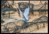 金門飛禽走獸花卉精華篇,其它散見於拍攝地點的相簿內。:金門飛禽走獸花卉精華篇02.jpg