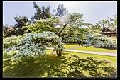 『石門水庫管理局』每逢四月一排平凡無奇的樹林,瞬間開闊的樹傘上積滿了白雪,是北台灣最美的流蘇花景點:石門水庫管理局08.jpg