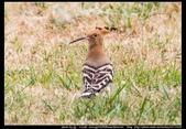 金門飛禽走獸花卉精華篇,其它散見於拍攝地點的相簿內。:金門飛禽走獸花卉精華篇30.jpg