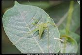 金門飛禽走獸花卉精華篇,其它散見於拍攝地點的相簿內。:金門飛禽走獸花卉精華篇33.jpg