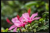 金門飛禽走獸花卉精華篇,其它散見於拍攝地點的相簿內。:金門飛禽走獸花卉精華篇22.jpg