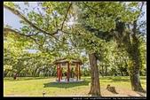 『石門水庫管理局』每逢四月一排平凡無奇的樹林,瞬間開闊的樹傘上積滿了白雪,是北台灣最美的流蘇花景點:石門水庫管理局07.jpg