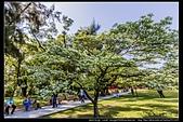 『石門水庫管理局』每逢四月一排平凡無奇的樹林,瞬間開闊的樹傘上積滿了白雪,是北台灣最美的流蘇花景點:石門水庫管理局03.jpg