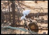 金門飛禽走獸花卉精華篇,其它散見於拍攝地點的相簿內。:金門飛禽走獸花卉精華篇01.jpg