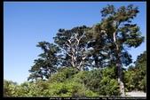 從武嶺至合歡山到關原的沿途雲山景觀可真是美絕了。:武嶺合歡山關原009.jpg