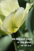 閱讀 二:We live and move in You alone.jpg