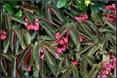 草花植物:0008.jpg