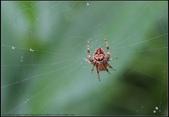 蜘蛛:鬼蛛