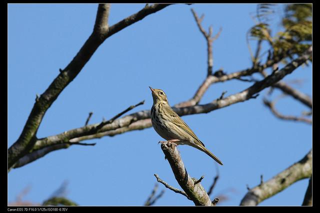 鳥類攝影:1770958777.jpg