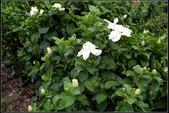木本花卉:0141.jpg