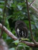 鳥類攝影:A20T1924.JPG