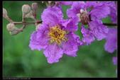 木本花卉:5839.jpg
