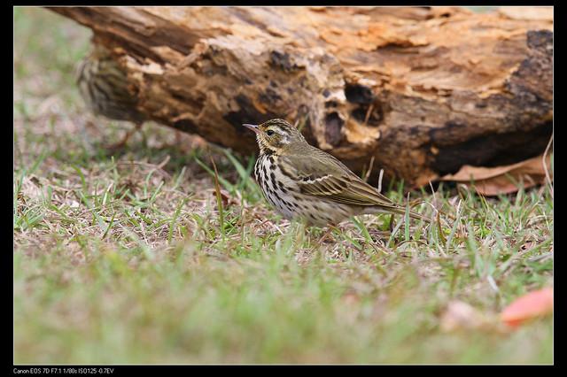 鳥類攝影:1770958760.jpg