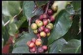 植物果實:1294506157.jpg