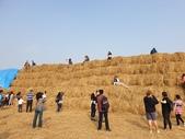 旅遊景點:捲心酥稻草