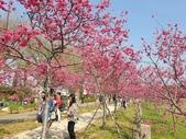 旅遊景點:中科崴立櫻花公園