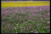 草花植物:花布