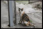 動物寫真:老家的貓